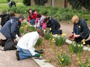 Daffodil planting with the Southwark Guerrilla Gardeners