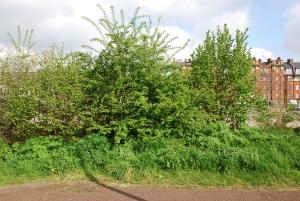 hedge-2013-3-300x201