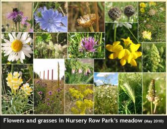 Meadow-flowers-postcard